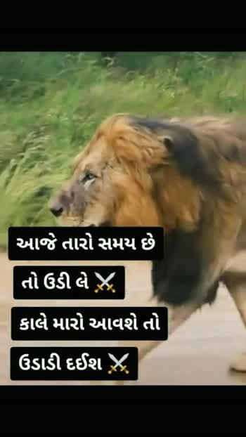 સાવજ ... #gaurav_gujju #gujju #rajkot #gujrat #roposo