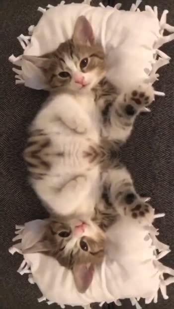 catlover#cat#catlover#catislove
