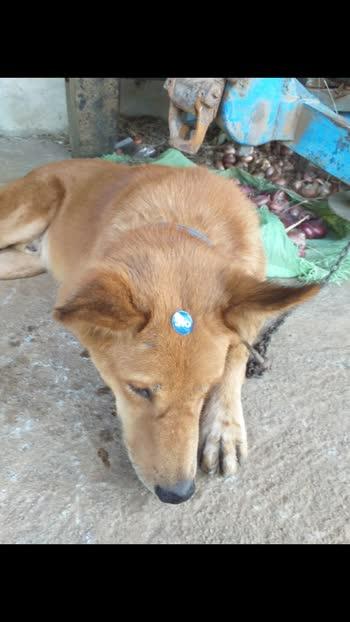my dog#dog#my dog