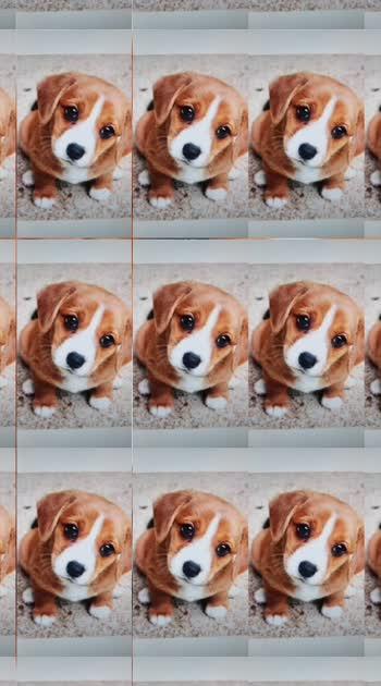 #cute #puppylover