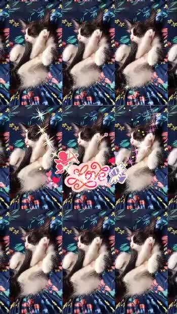 #catlove#kittens