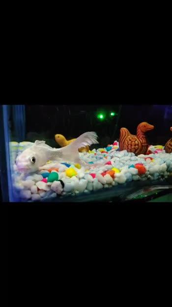 #fishtank #home #lights