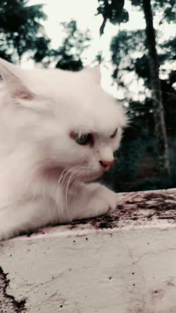 #cat #cats #catsagram #catstagram #instagood #kitten #kitty #kittens #pet #pets #animal #animals #petstagram #petsagram #photooftheday #catsofinstagram #ilovemycat #instagramcats #nature #catoftheday #lovecats #furry #sleeping #lovekittens #adorable #catlover #instacat