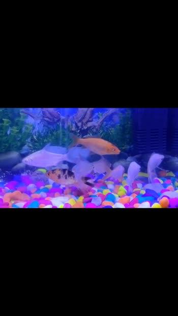 fish #foryou #fish#