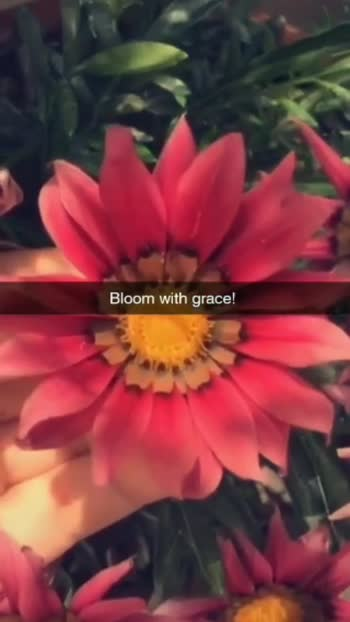 #bloom #countonme