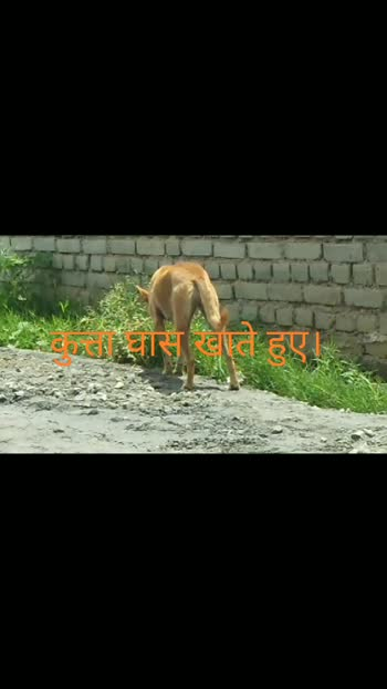 dog#dog#grass#eat# #dogeat #dog lover#dog