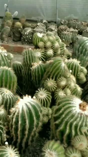 different varieties of cactus plant