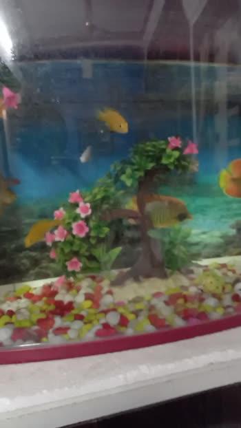 #aquarium