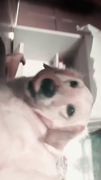 dog#dog #doglover