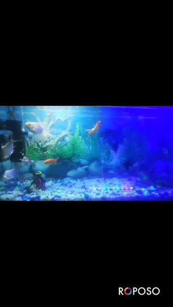 #aquariumfish