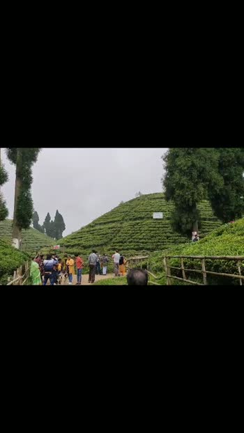 #darjeeling #darjeelingtea #darjeelingdiaries #travelogue #travelling #incredibleindia #indiatravel #indiantourism #travelvideos