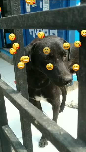 #petlover  #doglover  #doglovers #ilovemydog  #streetdoglover  #streetdogs  #straydogs  #happiness  #love  #care  #doggo #foryou #foryoupage #foryoupagevideo