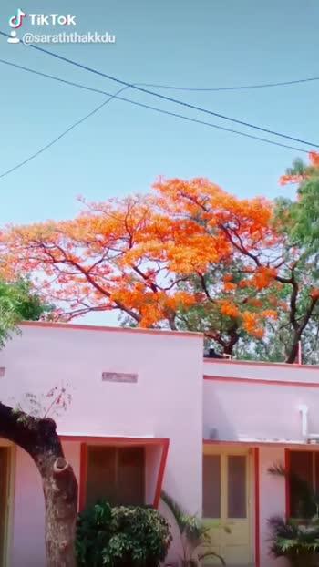 പ്രണയം എന്നും സഖാവിനോട് മാത്രം#nellika07 #keralagodsowncountry #love-status-roposo-beats #keralatourism #love----love----love #saghavu