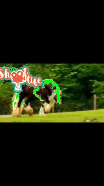 #horselover #supportmeguys #gallop #horsepower #fastbeatsongs  #horse_riding #beautifulstatus #love #roposostar #ridersadventure