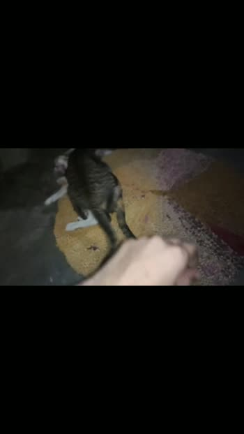 wwe my cat  #lovecats #catslover #pussycat
