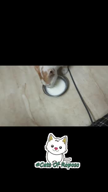 kitty#ilikeit