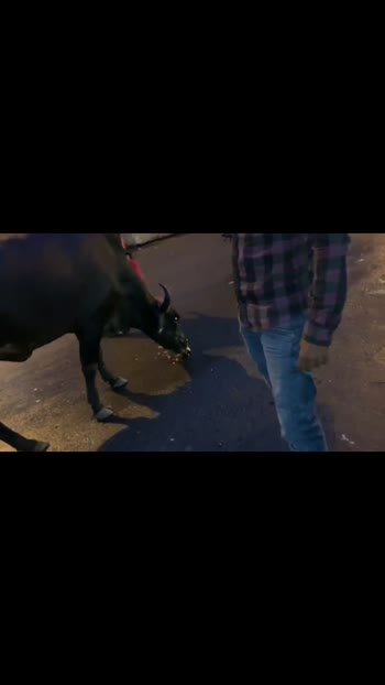 #feeding cows #viralvideo #goviral #cows #feeding