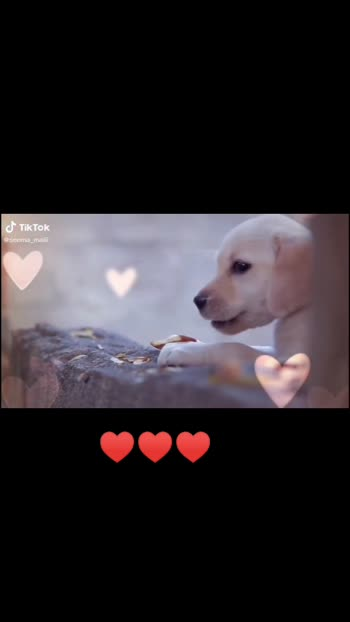 #doglover #doglover #dog