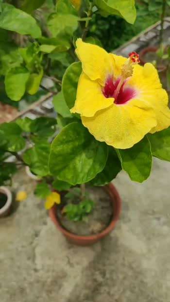 #foryoupage #followme #flowermagic #flowerstagram #flowerslovers #floweroftheday #flowerporn #flowerkiss #flowersphotography #flowerseverywhere #flowertiara