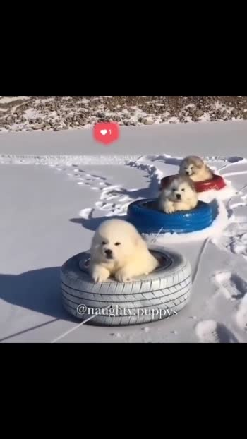 In surface of ice ❣️❣️❤️❤️  #dog #doglover #dogs #doglove #puppy #puppys #puppylife #puppy_dalzzz