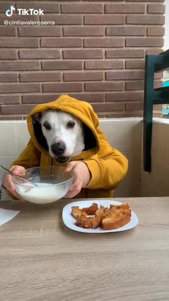 #petstagram #instadog #photooftheday #lovedogs #dogs_of_instagram #ilovemydog #cute #instapuppy #petsagram #dog #animals #prilaga #dogsitting #hound #dogstagram #instagood #nice #smile #animal #doglover #adorable #pup #dogoftheday #pet #pets #puppy #eyes #instagramdogs #lovepuppies