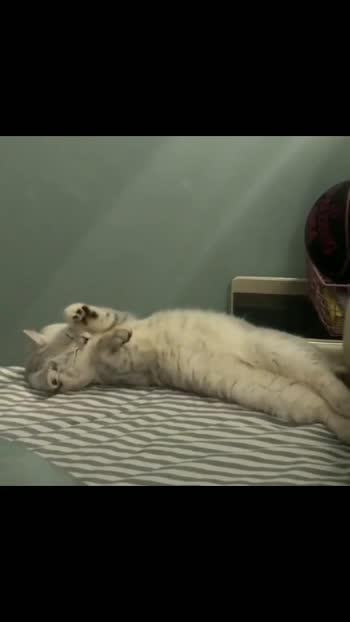 #cat #catslover #catsofinstagram