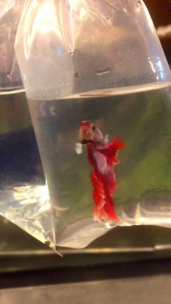 #fishlover #aquariumfish