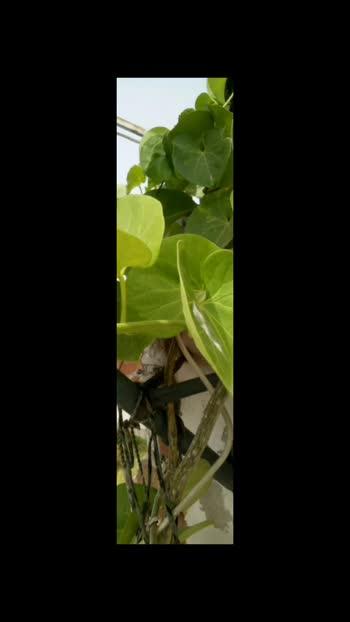 #######leaf