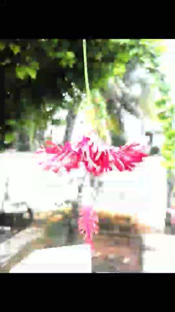 #flowers #blossom #hibiscusflower #hibiscus #sembaruthi #sembaruthiserial