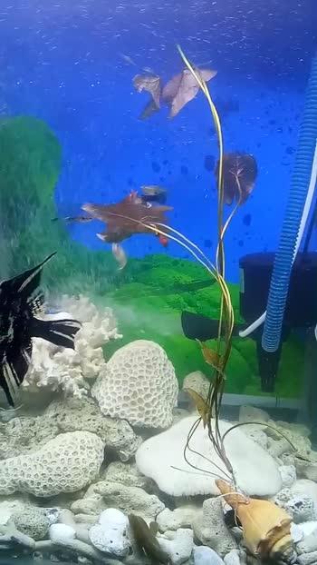 ##/ my little coral reef Aquriem #..😘😘😘
