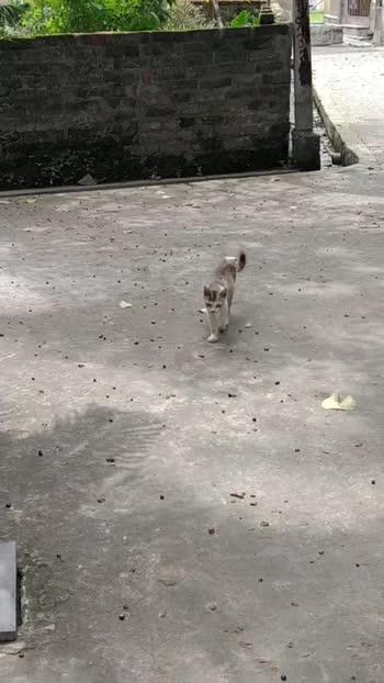 my pussy love❤️