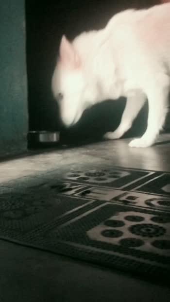 Doodh bhi nhi piya jata isse..... . . . #dog #puppy  #dogsofinstagram #dogs  #dogstagram #pet  #instadog #love  #doglover #dogoftheday