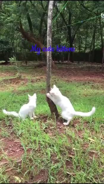 #Lovecats#Bebo#Kuttu#roposo