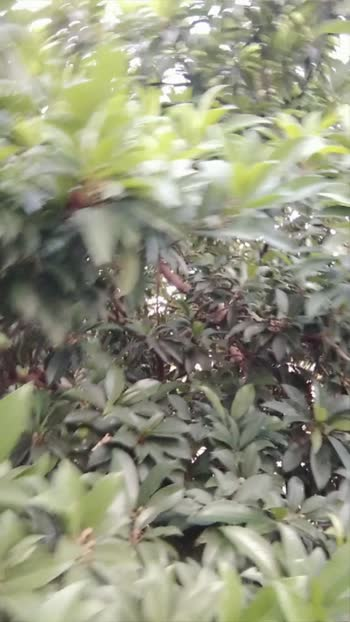 is video is anaconda