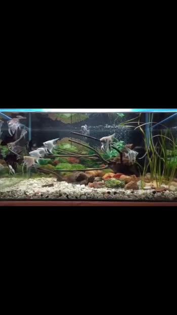 aqarium goals #aquarium #aquariumfish  #aquariumfish