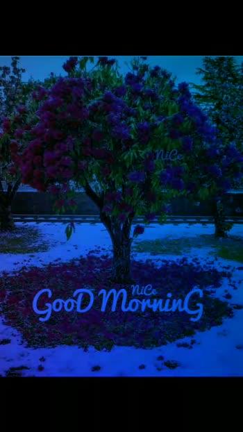 #goodmorning #goodmorningposts  #goodevening #goodnightsweetdreams #good