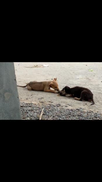 puppy vs puppy