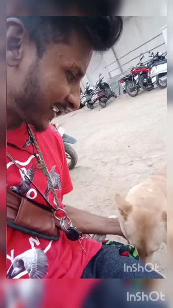 #love dogs#cute dogs#ilikeit dogs#