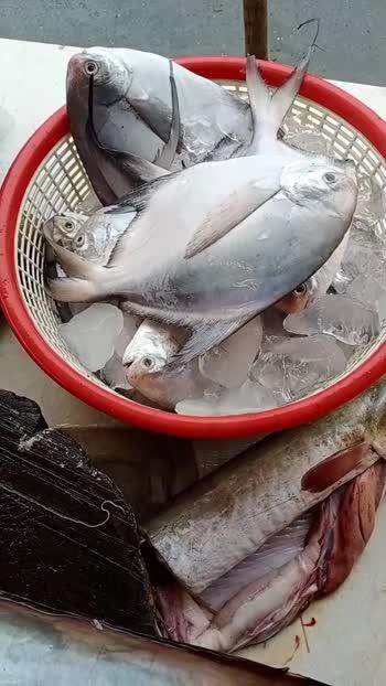 fish #fish man koli fish