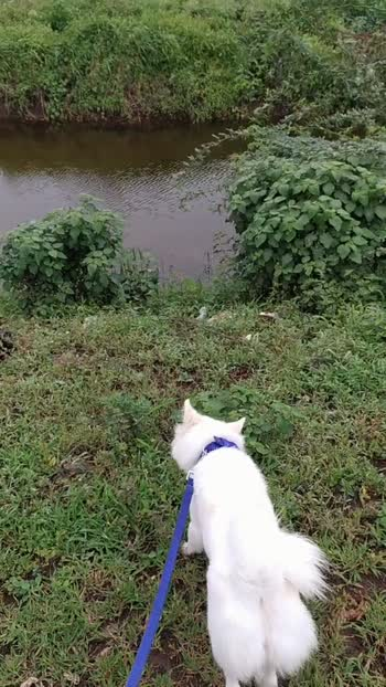 #hound #dogs_of_instagram #puppy #pet #cute #instapuppy #dogoftheday #doglover #dog #photooftheday #instagramdogs #instagood #petsagram #prilaga #ilovemydog #animals #lovepuppies #pets #eyes #nice #smile #dogsitting #instadog #animal #lovedogs #pup #dogstagram