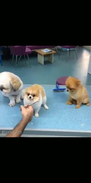 #dog #doglover #doggystyle