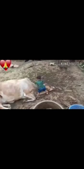 #Cute #Baby #Playing With #Funny #Cow | Cow and Baby #Friendship जय गऊ माता  #funny #animals #animallove #animallovers #animalphotography #animalrights #Love #motherhood  #mother #mothernature #right #india #indian #worship #babyboy #playinggames #instagood #insta #instadaily #instamood #instagram #instatravel #instalife #instavideo #instamoment