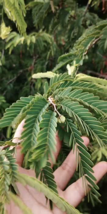 KHUB K LIYE OR DUSRO K LIA TREES KO MAT KATIYE AND DUSRO KO V BATAIYE TREES KO NA KATE❤️ #natue #naturelover #savetrees