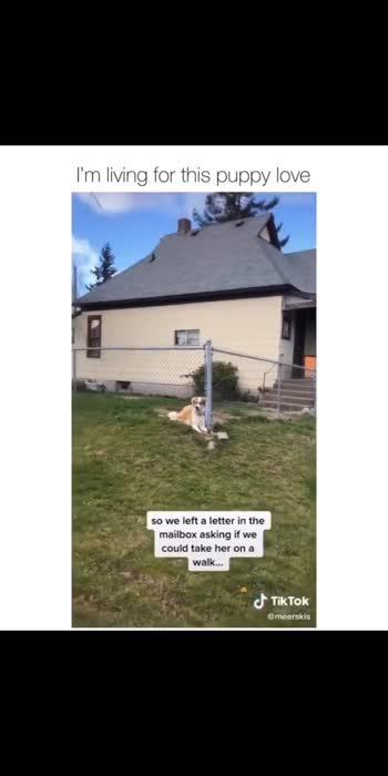 this is so wholesome (Spotify Playlist - Link in Bio) via : meerskis / TikTok .⠀ .⠀ .⠀ .⠀ .⠀ .⠀ .⠀ #dog #dogsofinstagram #dogs #dogstagram⠀ #doglover #dogoftheday #doglife #doglovers⠀ #doggy #dogsofinsta #dogsofig #doggo #doglove⠀ #dogsitting #dogslife #dogsofinstaworld #doggie⠀ #dogscorner #dogphotography #dogofinstagram⠀ #dogmom #dogsofinstgram #dogmodel #dogwalk⠀ #dogood #doge #dogtraining #doggies #dogwalking⠀ #dogsandpals