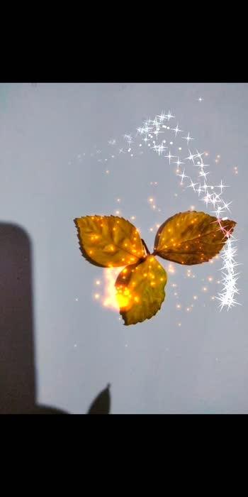 life of leaf