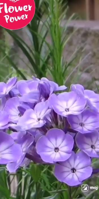 #flowerslovers #flowersofinstagram #flower #viralvideo