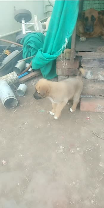 small small puppy of mother jimi