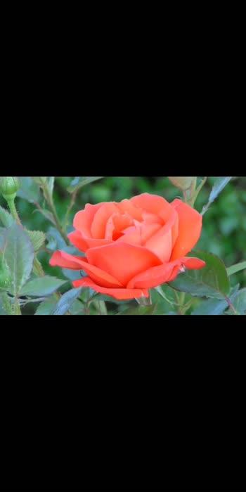 #blossom #flowermagic