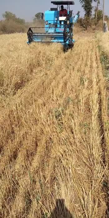 #harvesting