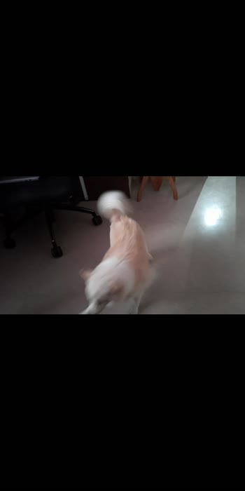 ##doggielove ##funtimes